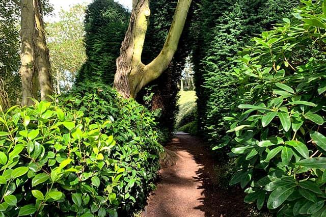 Testament Bild grüne Pflanzen